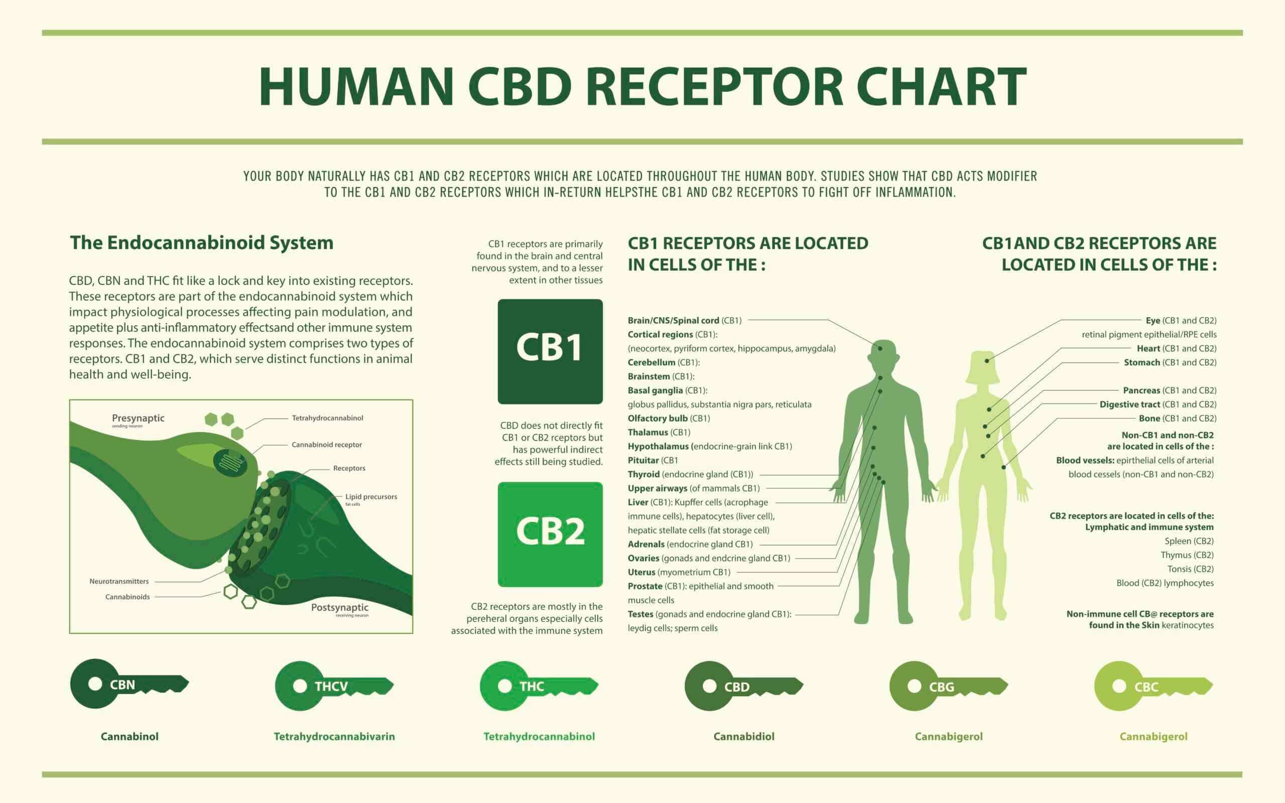 The Endocannabinoid Receptors:                              Health & Diseases 1