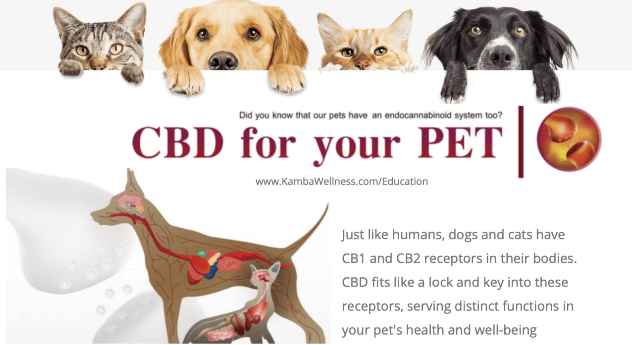 The Endocannabinoids System and CBD for your Pets 1