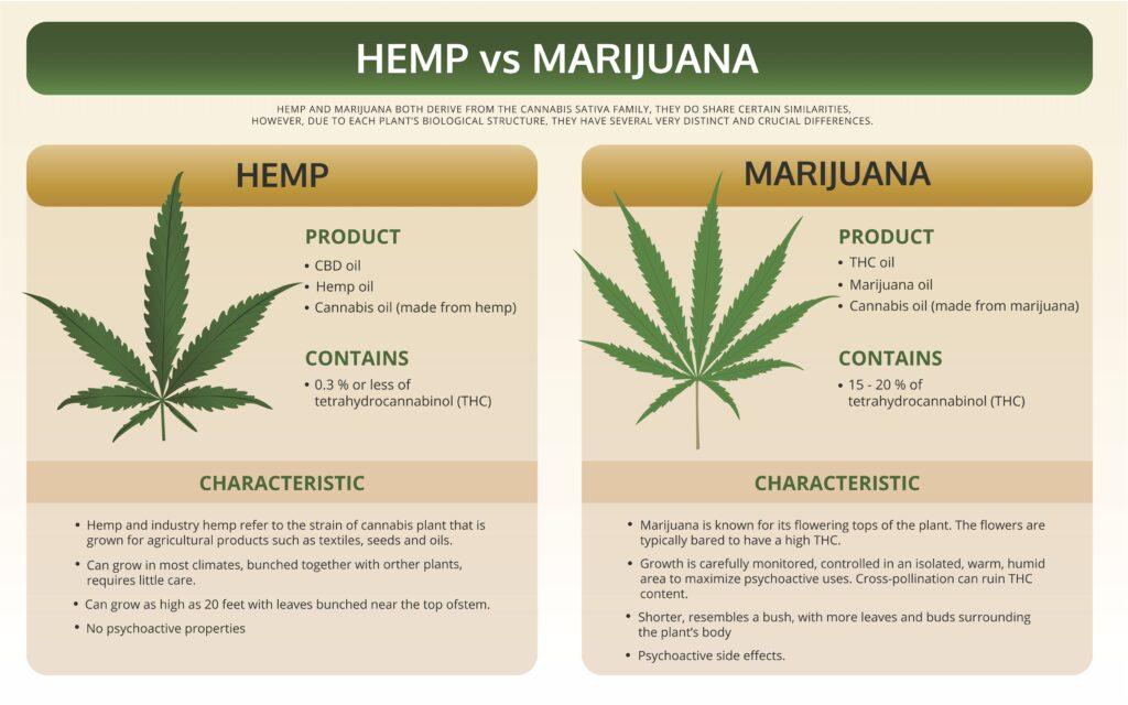 Differences Between Hemp & Marijuana 8