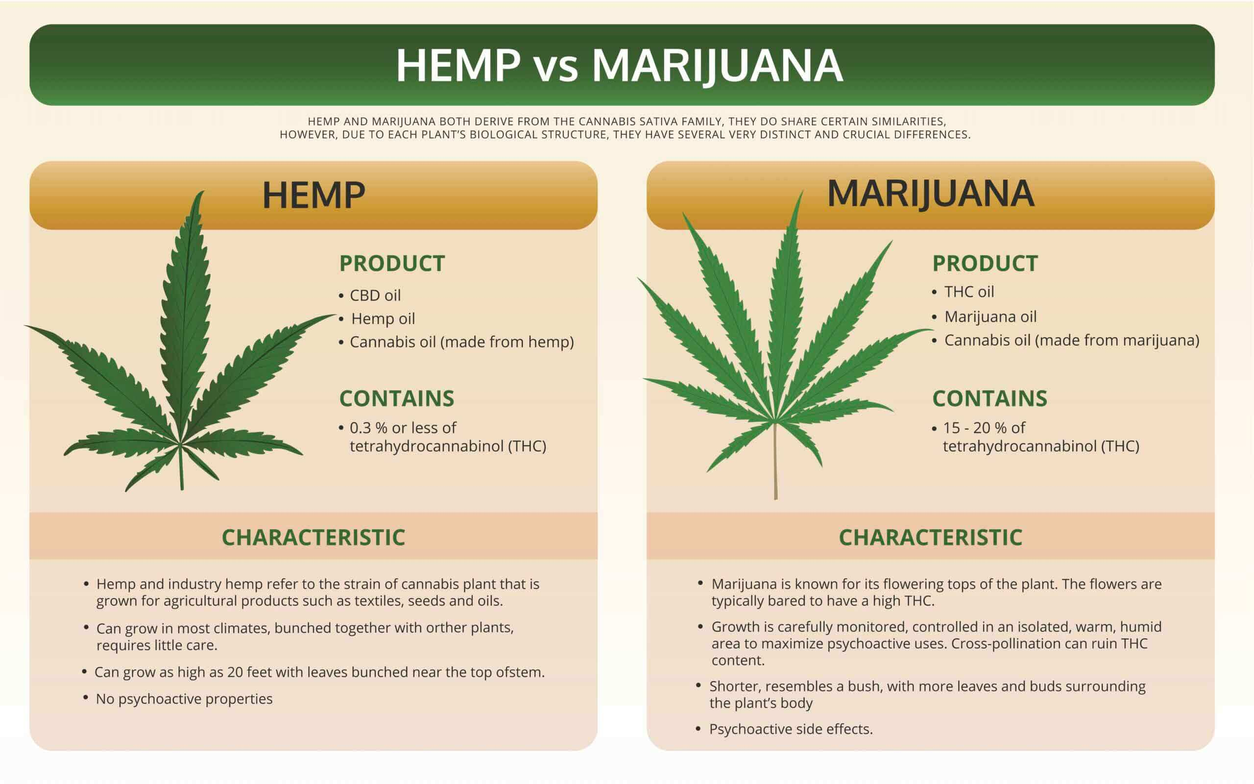 Differences Between Hemp & Marijuana 1